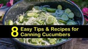canning cucumbers titleimg1