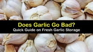 does garlic go bad titleimg1
