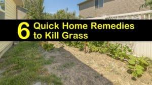 home remedies to kill grass titleimg1
