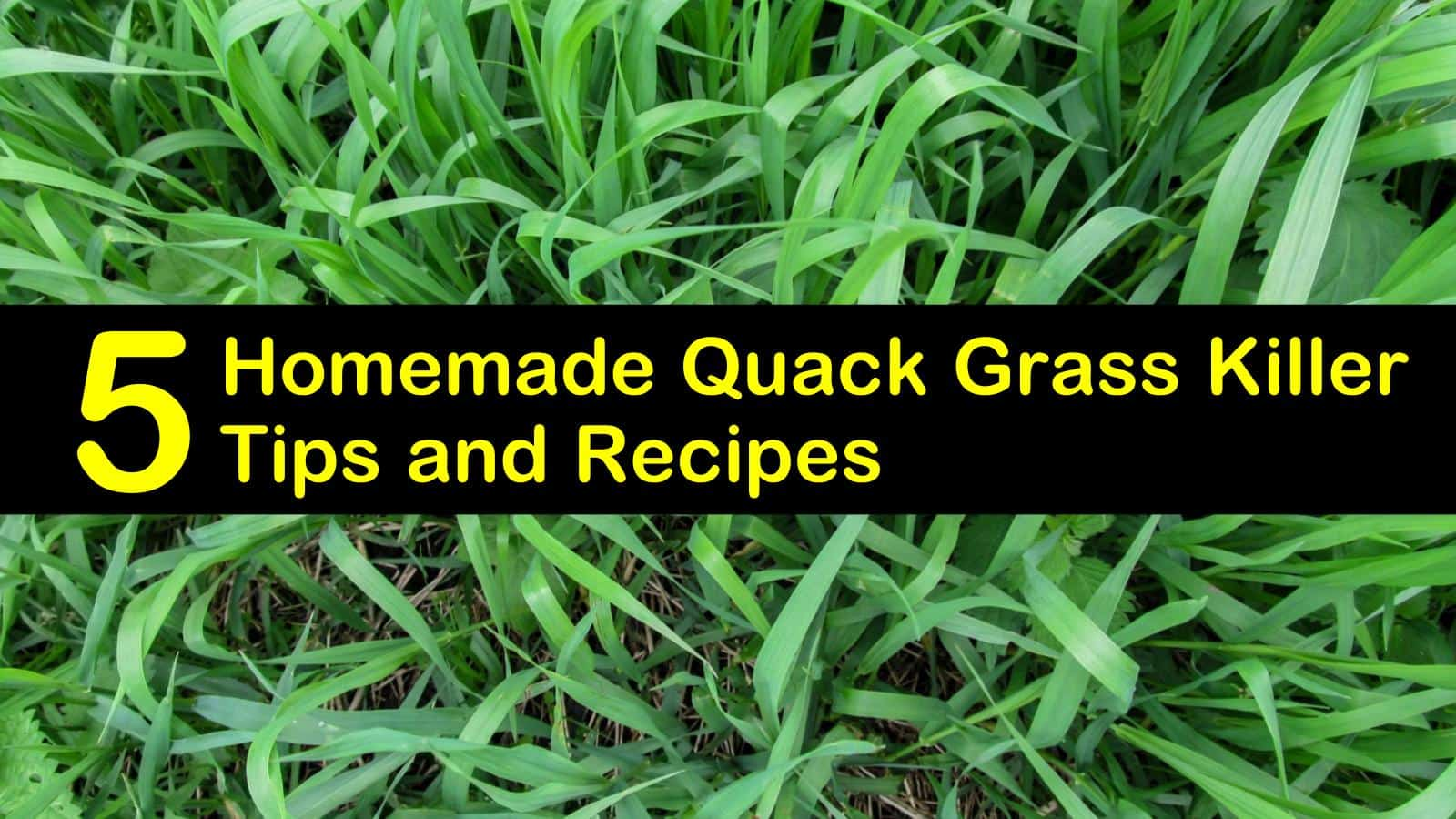 homemade quack grass killer titleimg1