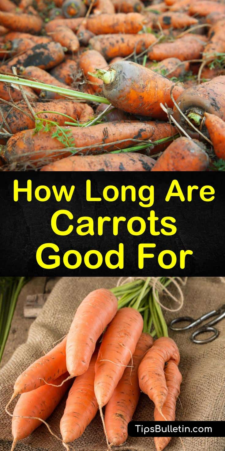 How long do carrots last, and when is it time to toss them out? Learn the shelf life of fresh carrots based on how they are stored, whether long term or short term. Use early warning signs to determine the difference between a moldy carrot and one with a white blush. #carrots #goodfor #carrotslast