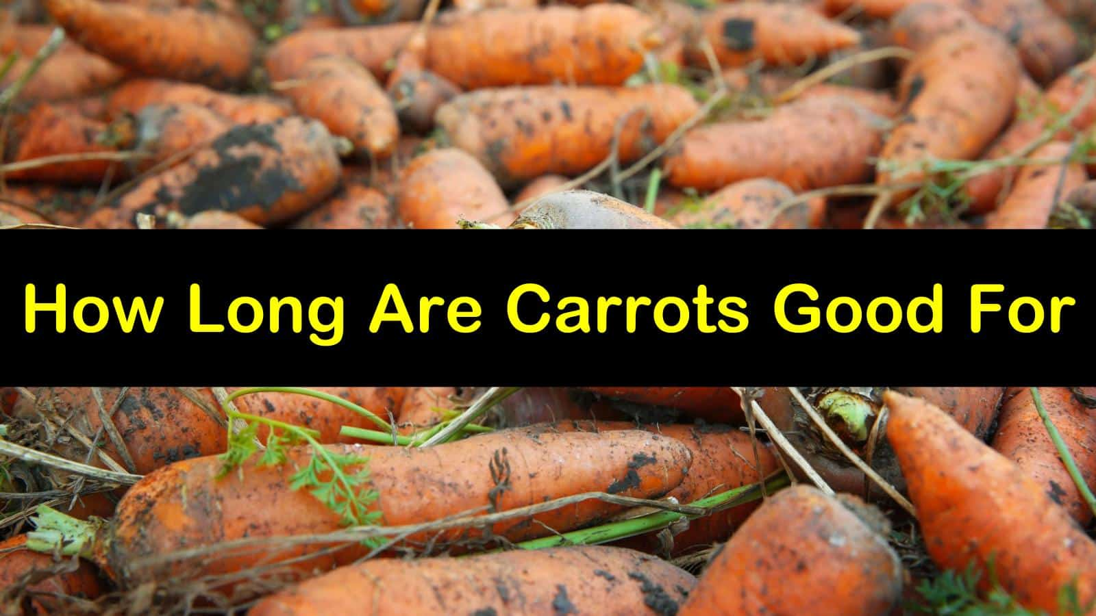 how long are carrots good for titleimg1