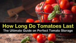 how long do tomatoes last titleimg1