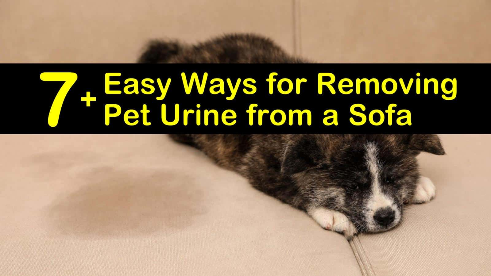 cleaning cat pee from upholstery