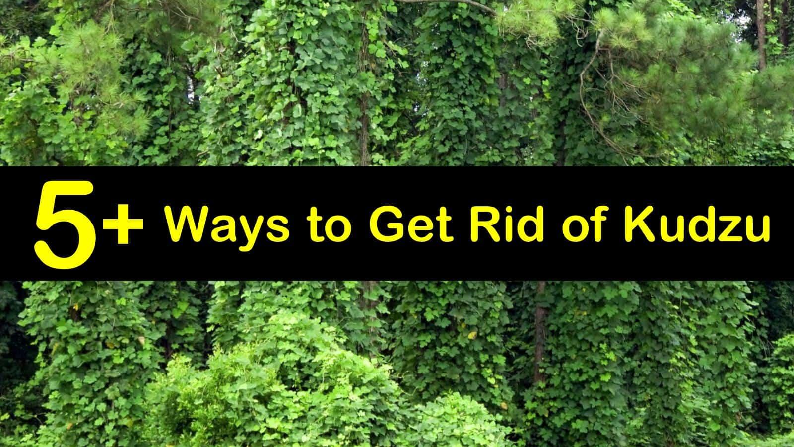 how to get rid of kudzu titleimg1