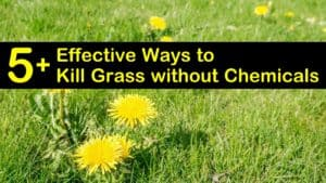 how to kill grass without chemicals titleimg1