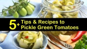 how to pickle green tomatoes titleimg1