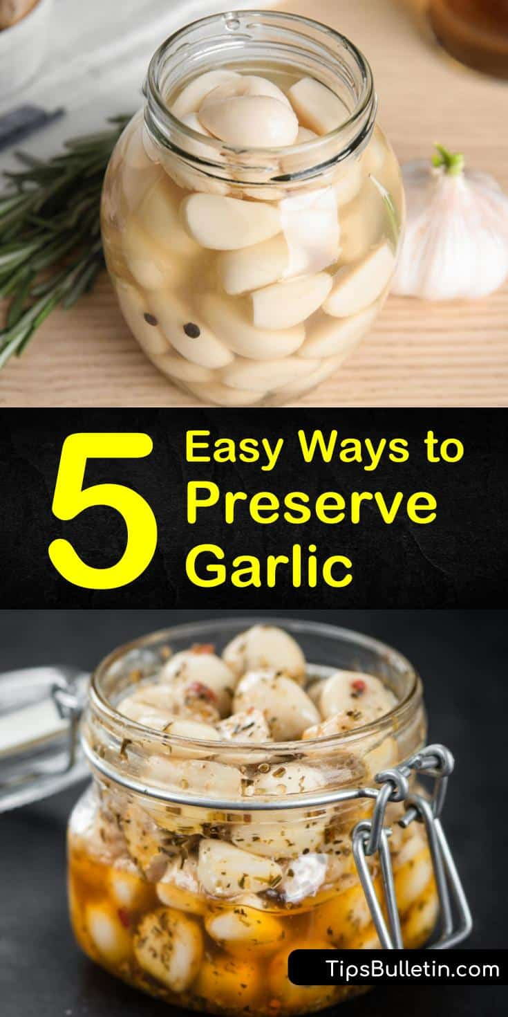 Find out how to preserve garlic in vinegar and in oil with our simple guide. We show you how to store garlic cloves in olive oil and give you options for including minced garlic in your favorite pickles recipe. #garlic #preservinggarlic #preservegarlic