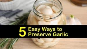 how to preserve garlic titleimg1