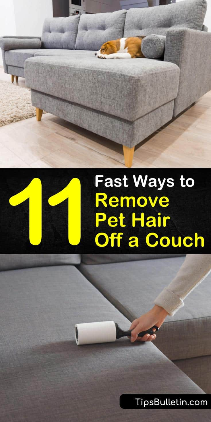 Pet owners often struggle with the daily occurrence of dog hair on furniture. Use a vacuum cleaner to remove pet hair, and use fabric softener and a lint roller to keep loose pet hair at bay in between vacuumings. #removepethair #couch #doghair #sofa