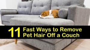 how to remove dog hair from a couch titleimg1