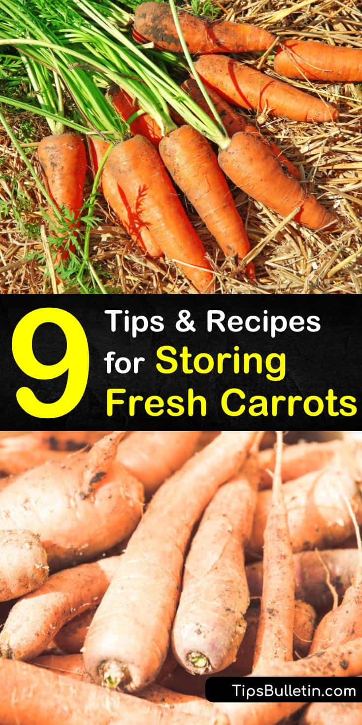 Discover how to store unwashed, fresh carrots in damp sand or by leaving them in the ground, covered in mulch. Keep carrots fresh in the fridge by wrapping them in damp paper towels or store them by canning for the longest shelf life. #howtostorecarrots #storingcarrots #carrotstorage