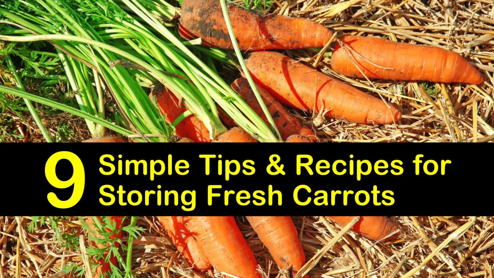 how to store carrots titleimg1
