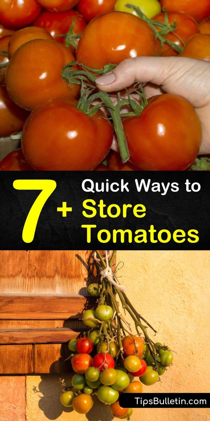 Curious about how to store tomatoes straight from the farmers market? Whether storing green tomatoes in a paper bag until they achieve ripeness, or preserving fresh tomatoes long term in the freezer, we have the information here. Also try canning and dehydrating tomatoes. #howto #store #tomatoes