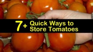 how to store tomatoes titleimg1