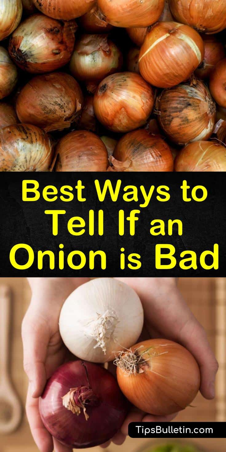 Even if you pick out the freshest onion and store it properly, if kept too long it spoils. Come find out what to look for to see if it's time to throw out your onions. #rottingonions #onion #bad