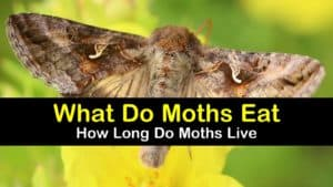 what do moths eat titleimg1