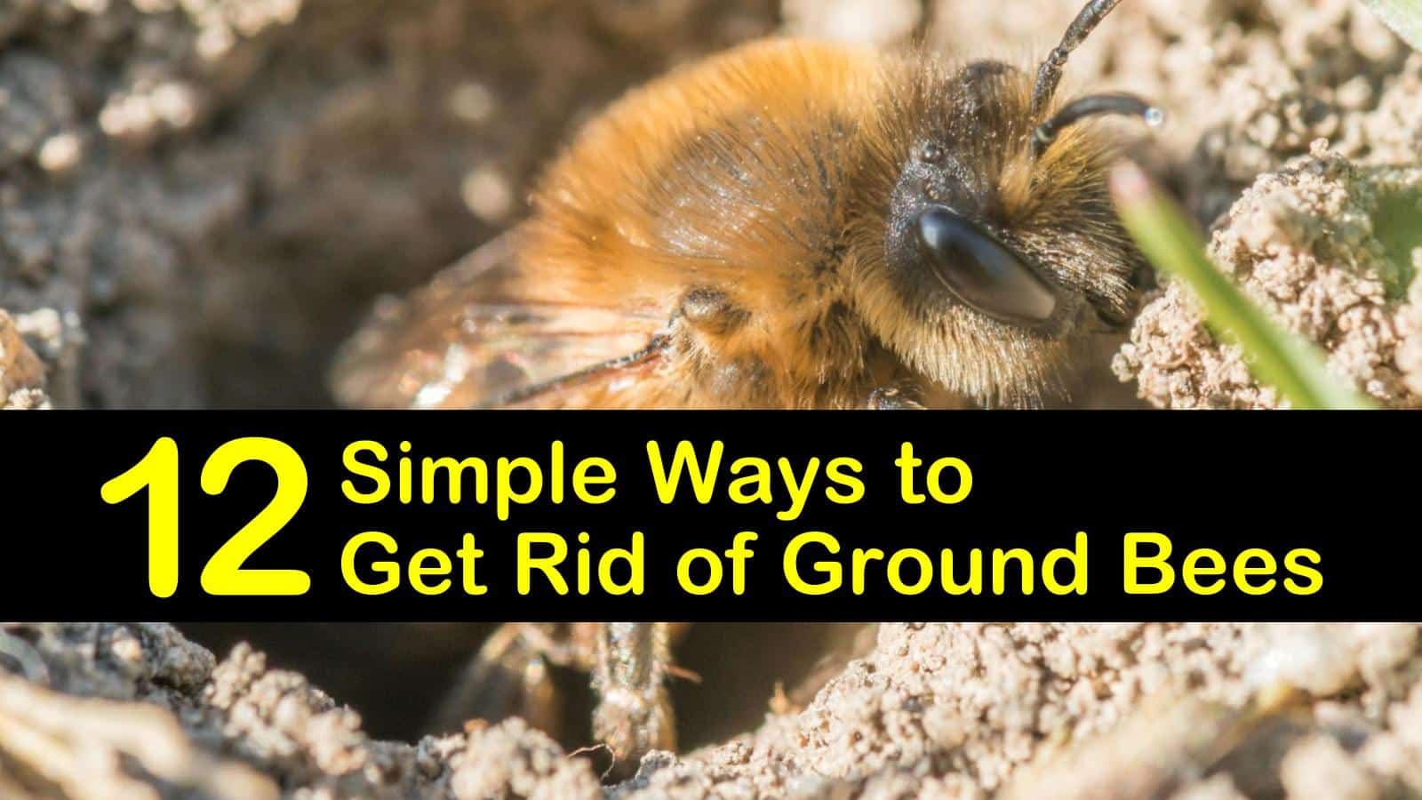 12 Simple Ways To Get Rid Of Ground Bees