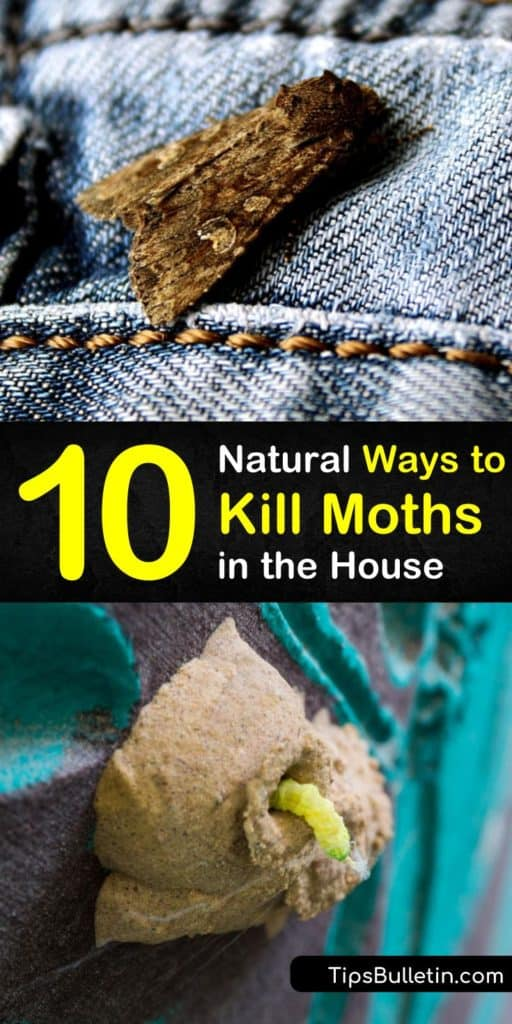 Sachets work well to deter adult moths, including pantry moths, but don't work on moth larvae. We show you various pest control methods that control and prevent future moth infestations in the house by killing moth eggs. #moths #getridofmoths #howtokillmoths