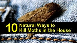 how to get rid of moths titleimg1