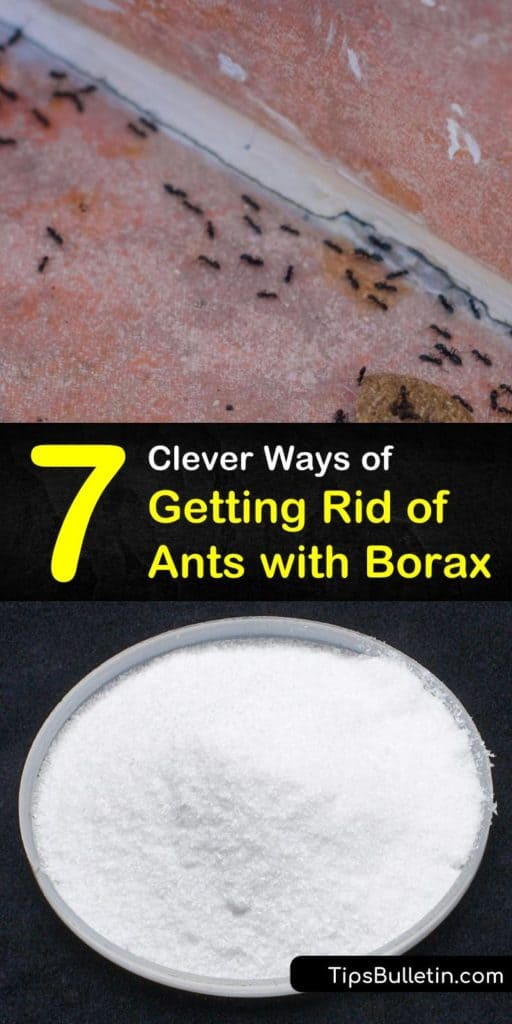 Learn how to kill ants and eliminate an ant problem using Borax, warm water, sugar, and cotton balls. Get rid of ants with Borax, peanut butter, and bread placed along ant trails to prevent an infestation. #howtokillants #killingantswithborax #borax #ants