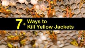 how to kill yellow jackets titleimg1
