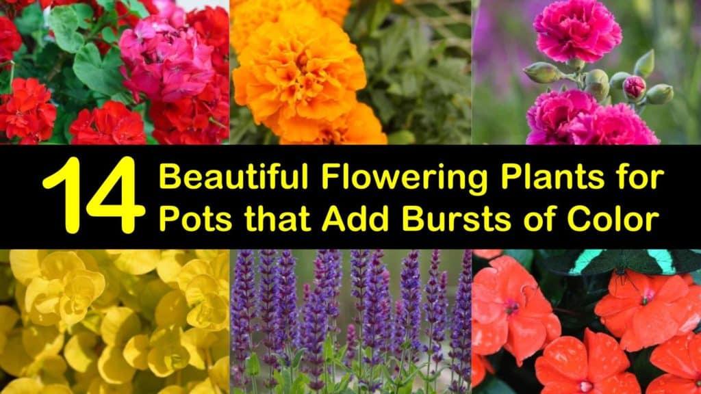 Amazing Flowering Plants for Pots titleimg1