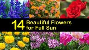 Amazing Flowers for Full Sun titleimg1