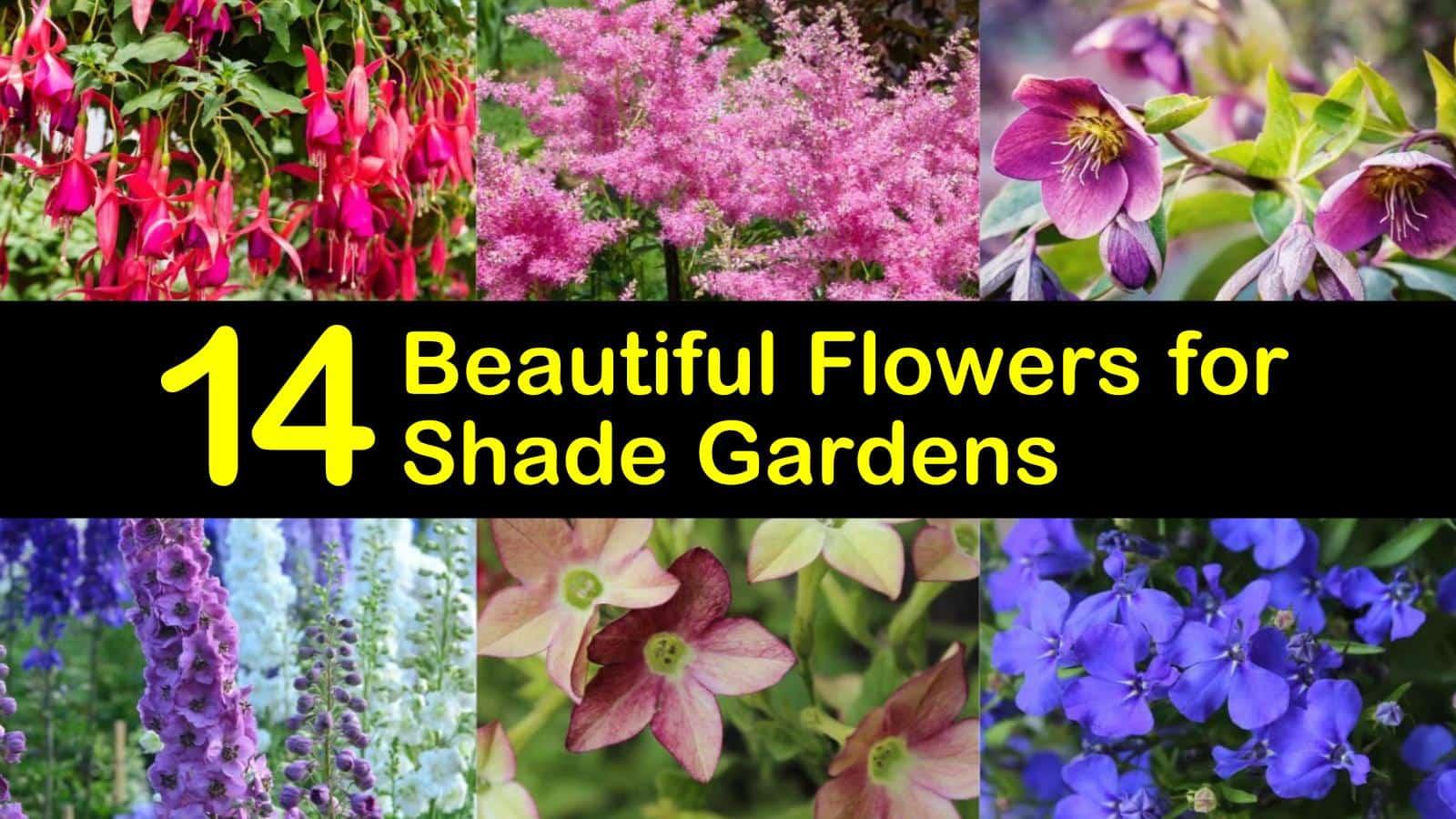 14 Beautiful Flowers For Shade Gardens