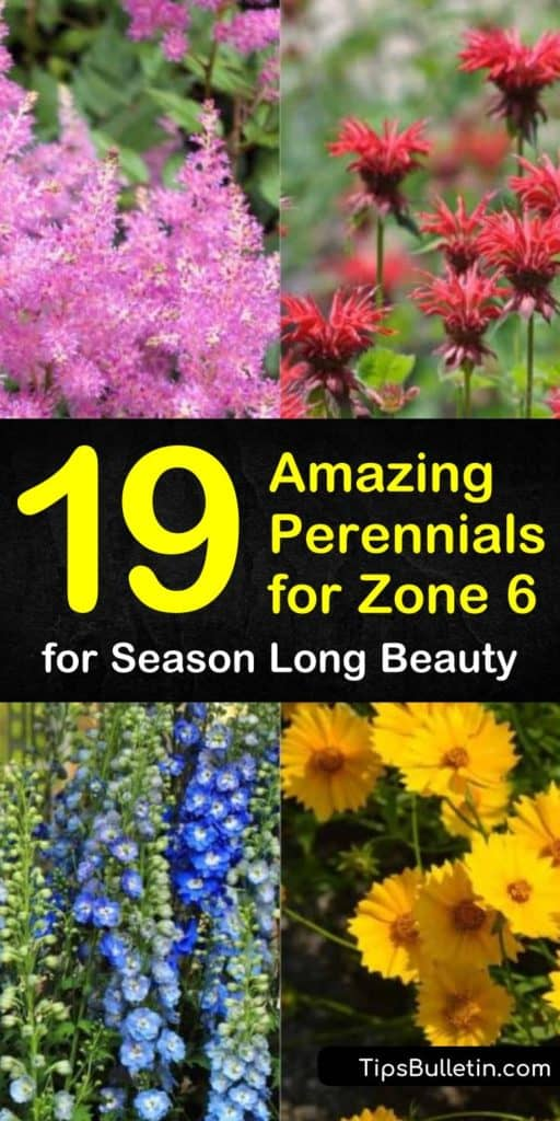 Discover the joys of growing amazing perennials for your hardiness zone. Plant daylily, echinacea, and cut flowers, and surround them with hosta and ground cover such as phlox to create a beautiful garden. #zone6perennials #perennialsinzone6