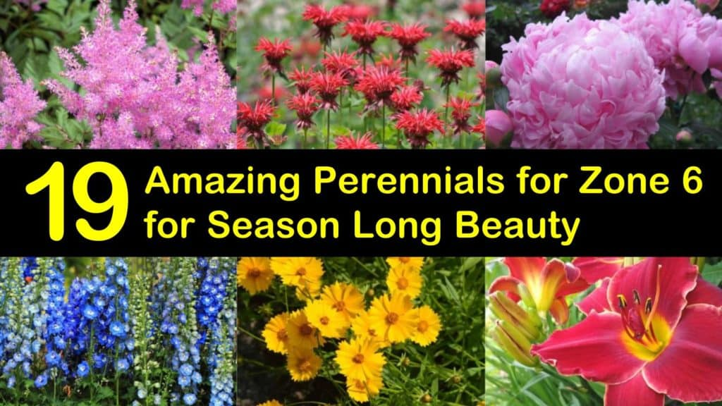 Amazing Perennials for Zone 6