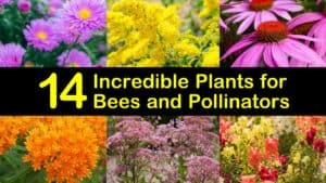 Amazing Plants for Bees titleimg1