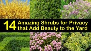 Amazing Shrubs for Privacy titleimg1