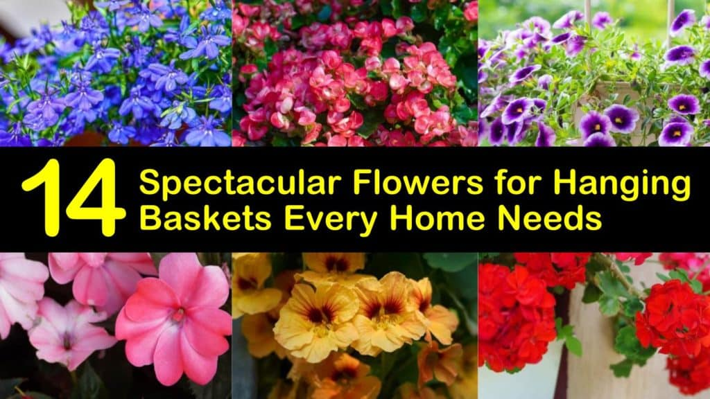 Best Flowers for Hanging Baskets titleimg1