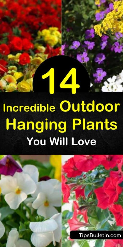 Enjoy colorful foliage and flowers throughout the summer with DIY hanging plants. Fill planters with succulents, fuchsia, ivy, lobelia, geranium, verbena, and other plant varieties and enjoy vibrant gardens at eye level. #outdoorhangingplants #hangingplants #outdoorflowerbaskets