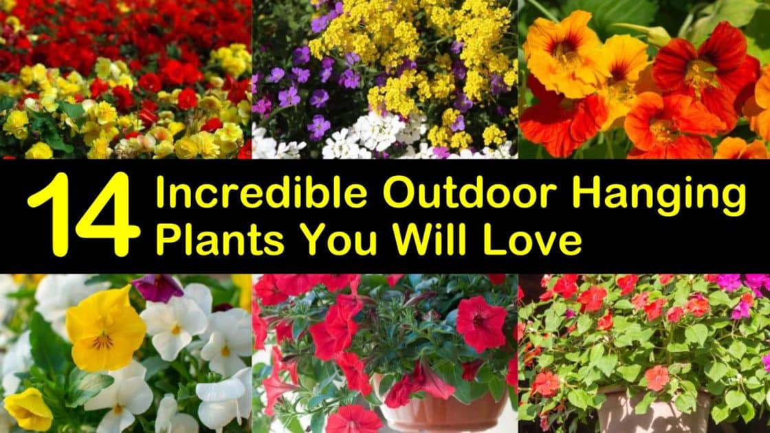 14 Incredible Outdoor Hanging Plants You Will Love