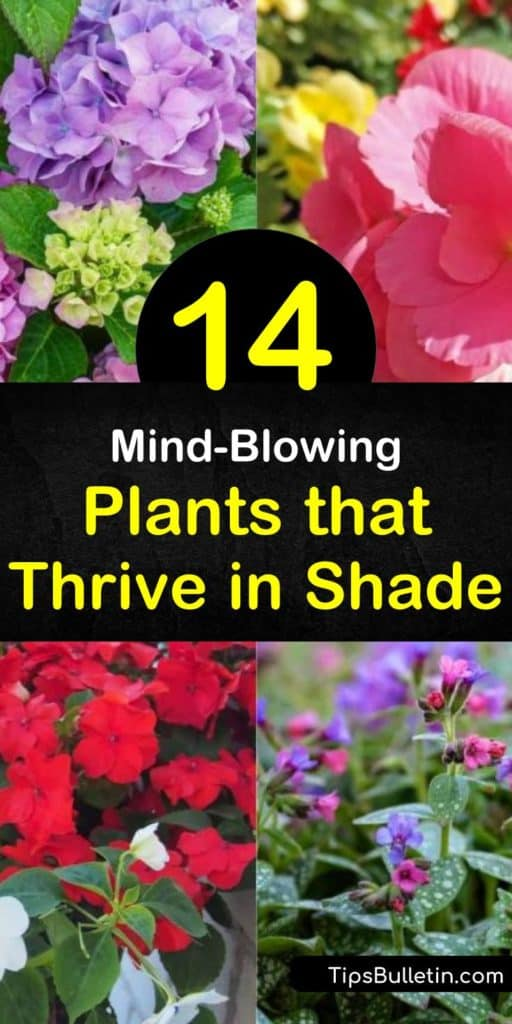 Looking to spruce up those shady areas areas with something besides hosta? Let us show you the best plants for full shade, as well as those that thrive in partial shade. From hardy evergreens to colorful coral bells, we show you what works best. #shade #plants #shadeplants #plantsforshade
