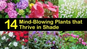 Best Plants for Shade titleimg1