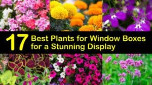 Best Plants for Window Boxes titleimg1