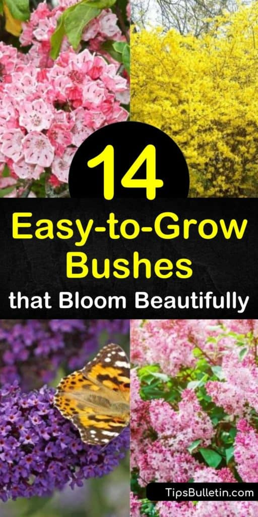 Fill your garden with blooming shrubs from late spring through late summer. Enjoy white flowers of hydrangea and spirea or vibrant, pink blooms of the evergreen shrub, azalea, and watch as pollinators flock to your yard. #easytogrowbushes #easygrowingbushes #bushes