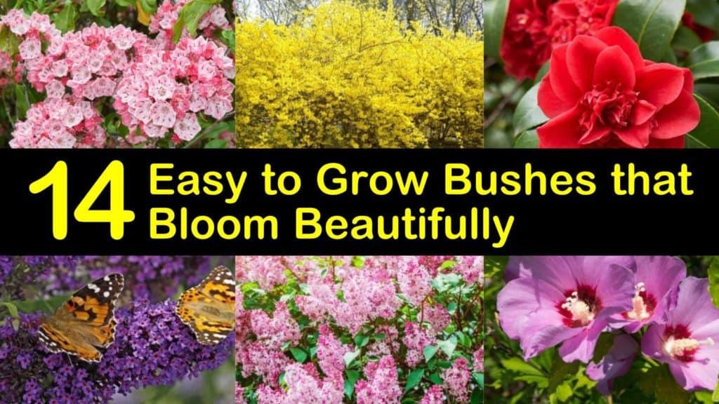 Easy to Grow Bushes titleimg1