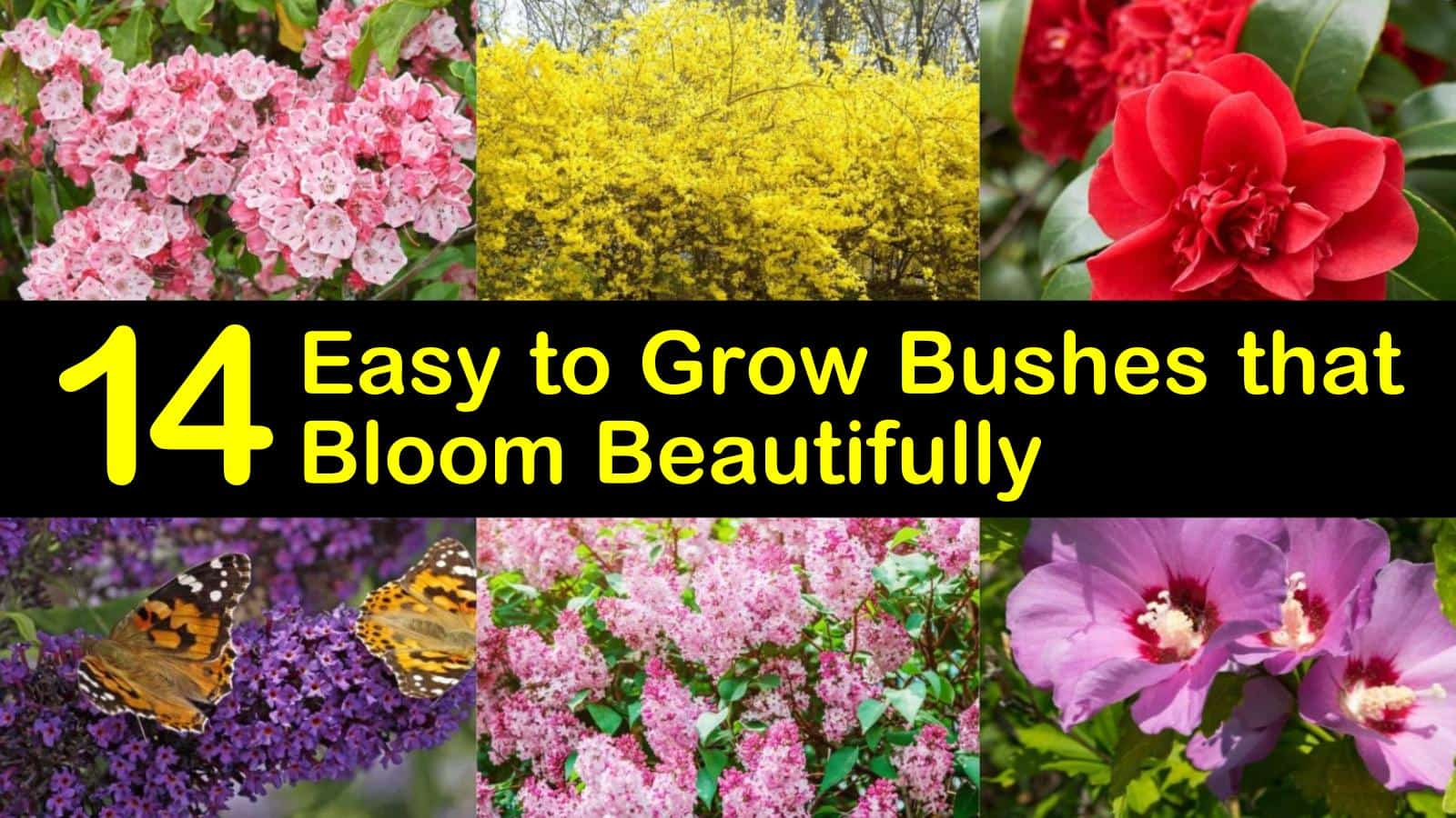 14 Easy To Grow Bushes That Bloom Beautifully