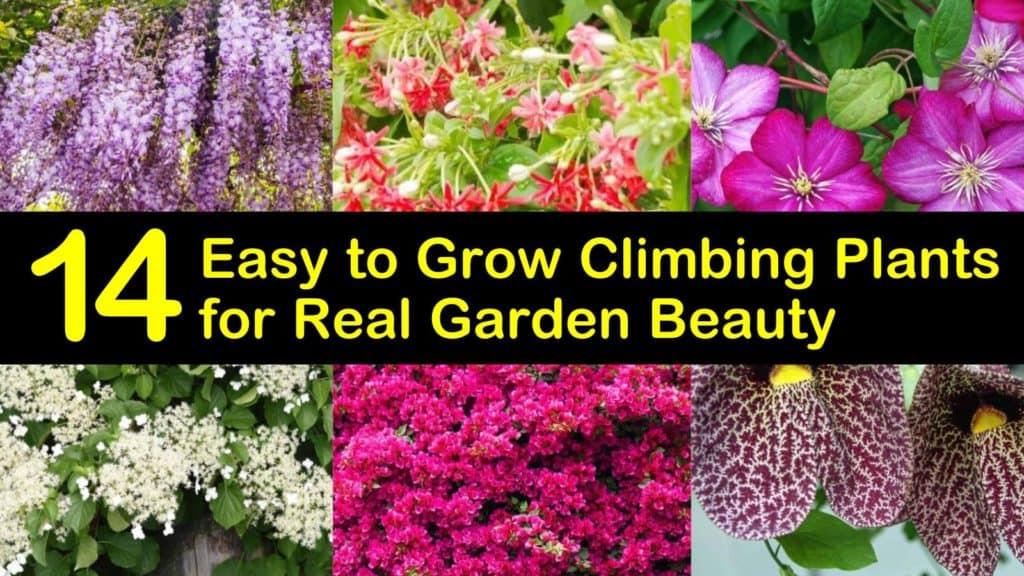 Easy to Grow Climbing Plants titleimg1