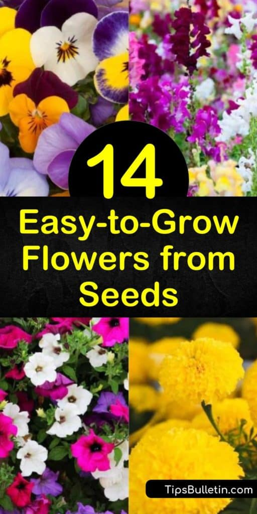 Come learn which are the best flower seeds to plant in full sun for cut flowers, containers, or flower beds. Let us show you what seed packets to choose for blooms in the early spring to late summer, and every other growing season. #growfromseeds #growflowersfromseeds #flowers