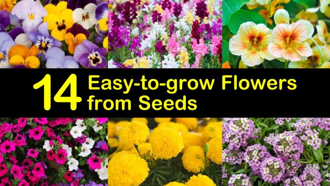 14 Easy-to-grow Flowers from Seeds