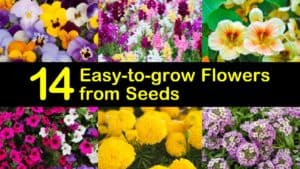 Easy to Grow Flowers from Seeds titleimg1