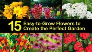 Easy to Grow Flowers titleimg1