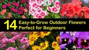Easy to Grow Outdoor Flowers titleimg1