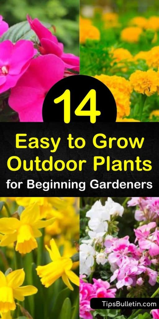 Discover how to create a garden by planting drought-tolerant, deer-resistant plants such as marigolds and hostas. Attract hummingbirds with blooming flowers from spring until late summer and accentuate them with ground cover such as sedum. #easytogrowplants #easycareplants #easy #grow #plants