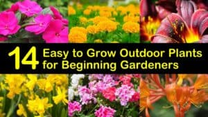 Easy to Grow Outdoor Plants titleimg1
